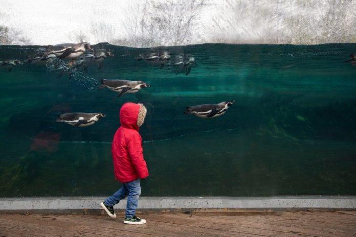 2020 BIAZA (Hayvanat Bahçeleri ve Akvaryumlar) Fotoğraf Yarışması'nın Kazananları Belli Oldu