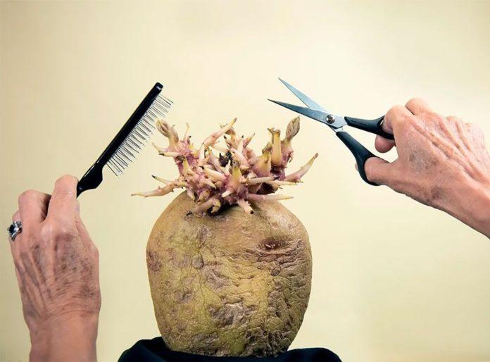 Patates Fotoğrafları Yarışması'nın Kazananları Belli Oldu