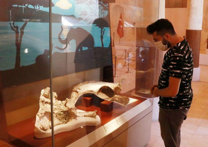 İki Milyon Yıllık Fosiller Burdur Doğa Tarihi Müzesi'nde Sergileniyor