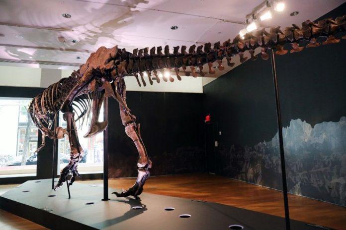 67 Milyon Yaşındaki Dinozor İskeleti Açık Artırmayla Satılacak