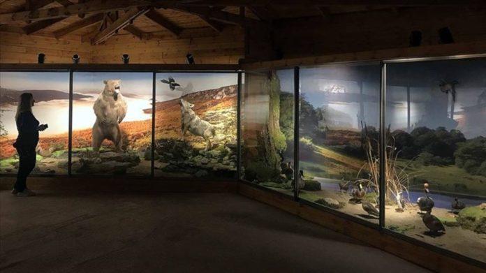 Nadir Tabiat Varlıklarını Gelecek Nesillere Taşıyan Müze: Yenice Doğa ve Hayvan Müzesi