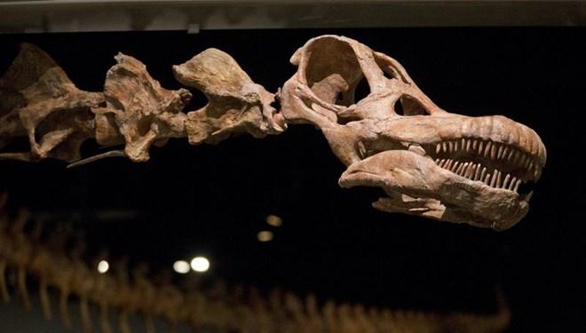 Arjantin'de 98 Milyon Yıllık Dinozor Fosili Bulundu: Yeryüzündeki en Büyük Hayvan Olduğu Düşünülüyor