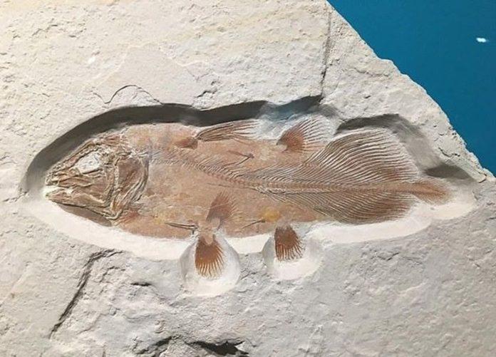 İngiltere'de 66 Milyon Yıllık Balık Fosili Bulundu